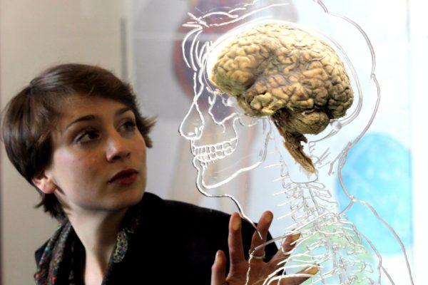 brains-2