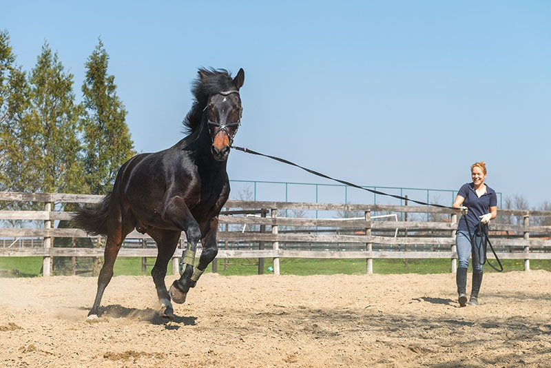 Why You Should Consider Purchasing Horse Insurance Daily